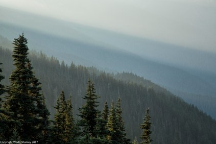 Hurricane Ridge